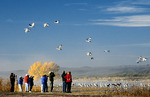 Bird watching at Bosque del Apache National Wildlife Refuge