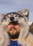 "Celebrant in ""wolf hat"" at annual Fur Rendezvous"