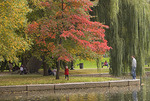 Autumn color in Boston Public Garden, a National Historic Landmark