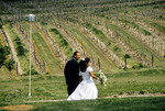 After wedding ceremony bride and groom walk through the vineyards at Vineland Estates Winery, Niagara, Ontario, Canada