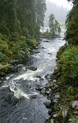Anan Creek, Anan Wildlife Observatory, Tongass National Forest, Alaska