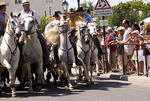 Running of the bulls in Saintes Maries de la Mer, Provence, France