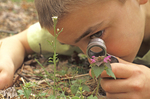 BOY LOOKING AT FLOWER WITH MAGNIFIER