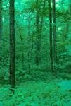 MATURE DECIDUOUS FOREST