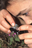 BOY LOOKING AT FLOWER THROUGH HAND LENS