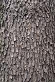 WILD BLACK CHERRY TREE BARK