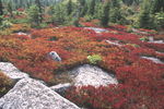 HUCKLEBERRY HEATHS IN THE DOLLY SODS WILDERNESS