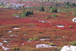 HUCKLEBERRY HEATHS IN THE DOLLY SODS WILDERNESS IN WV