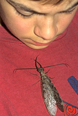 BOY WITH DOBSONFLY ON SHIRT