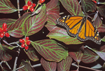 MONARCH BUTTERFLY ON DOGWOOD TREE WITH RIPE BERRIES