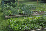 Fenced in vegetable garden with raised beds
