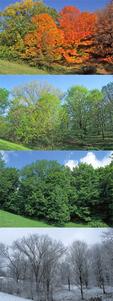 Sugar Maples 4-Seasons