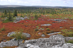 The Dolly Sods Wilderness in WV; fall color and rock formations