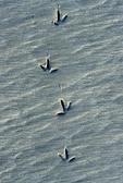 Bird tracks in the sand