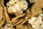Clusters cereal