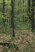 Deciduous woodland in springtime