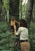 Wildlife biologist checking bird nesting box