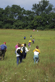 Children hiking in meadow