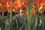 Boy looking through tulips