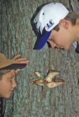 Boys looking at fungus