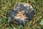 Scrambled egg slime mold after 24 hr.