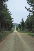 Dolly Sods road
