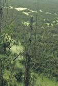 Green Bottom Swamp