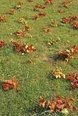 Fallen twigs from periodical cicadas