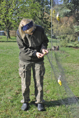 Lady bird bander removing American Goldfinch from mist net