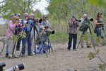 Birders and bird photographers looking at a recently found Kirtland's Warbler on the East Beach at Magee Marsh