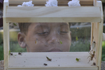 Boy looking at insects and spiders in a bug box he built.