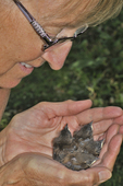 Lady holding four recently banded baby House Wrens