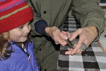 Little girl looking at Tufted Titmouse held by bird bander