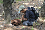 Young boy looking at Dye Polypore/Velvet-top Fungus