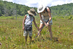 Grandmother and grandson looking at Pitcher Plants in Olsen Bog in WV