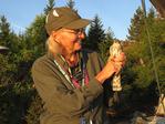 Immature Sharp-shinned Hawk held by bird bander