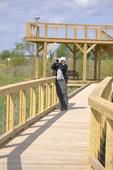 Lonely birdwatcher on boardwalk at Pearson Metropark wetland near Toledo in Ohio