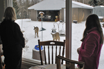 Mother and daughter watching hungry white-tailed deer visiting bird feeders