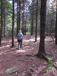 Lady hiking in a Red Spruce forest