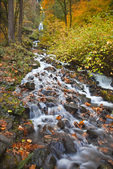 Autumn, Latourelle Falls and tumbling stream, Columbia River Gorge National Scenic Area, OR