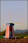 Dutch Windmill and Tulips, Wooden Shoe Bulb Co., Woodburn, OR
