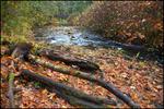 Silver Falls Creek, Silver Falls State Park, OR