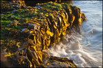 Kelp and Surf, Seal Rocks State Park, OR