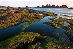Tidepools, Seal Rock State Park, OR