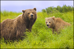 Brown Bear Mother and Cub, McNeil River State Game Preserve and Sanctuary, AK