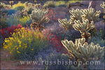 Backlight on Brittlebush, Jumping Cholla, and Chuparosa in bloom near Plum Canyon