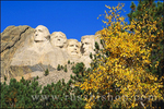 Morning light on Mount Rushmore and fall color under blue sky