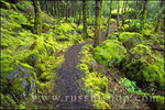 Trail through moss covered forest and rocks along the Columbia River