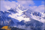 Fall aspens under fresh powder on Wilson Peak