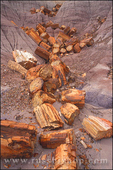 Petrified log sections in ravine on Blue Mesa